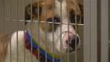 Kern County Animal Services builds public support to become no-kill shelter