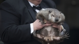 No shadow: Pennsylvania groundhog 'predicts' early spring